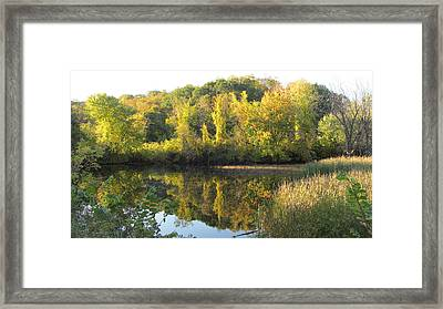 Autumn Sunlight On The Pond Framed Print