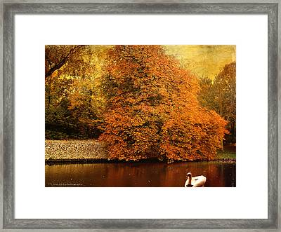 Autumn Swan - Red Leaves Framed Print by Yvon van der Wijk