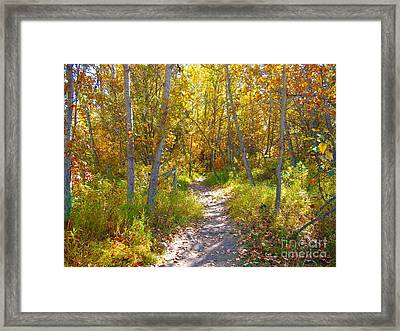 Autumn Trail Framed Print by Jim Sauchyn