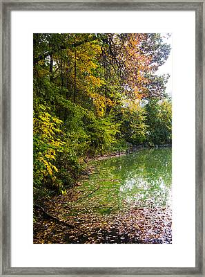 Autumn Tree Colors In Central Park  Framed Print