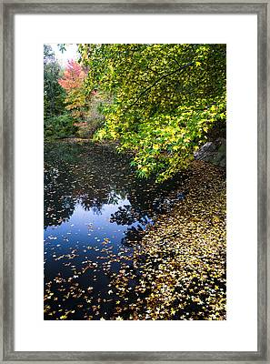 Autumn Tree Colors In Central Park In New York City Framed Print