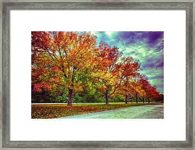 Autumn Tree Line At Busch Framed Print by Bill Tiepelman