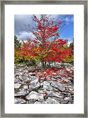 Autumn Trees And Rocks - Fall Colors Framed Print