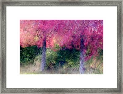Autumn Trees Framed Print by Carol Leigh