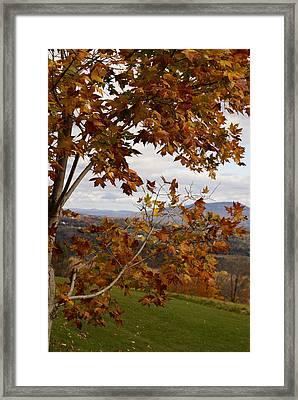 Autumn Trees Framed Print by Margaret Steinmeyer