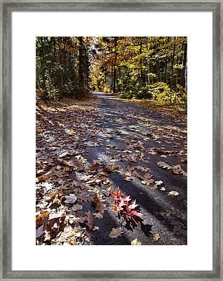 Autumn Trees Framed Print by Mark Duffy