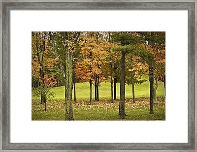 Autumn Trees Near Ithaca Michigan No.4037 Framed Print