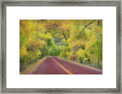 Autumn Trees On Road Framed Print