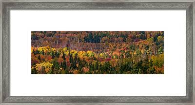 Autumn Trees Panorama Framed Print by Matt Dobson