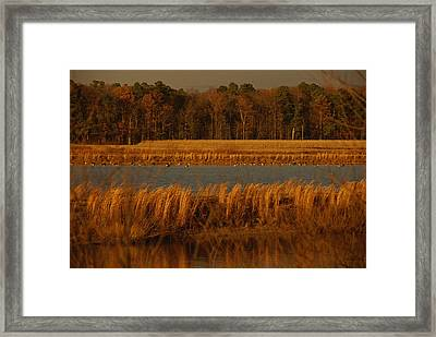Autumn View Of Canada Geese Framed Print