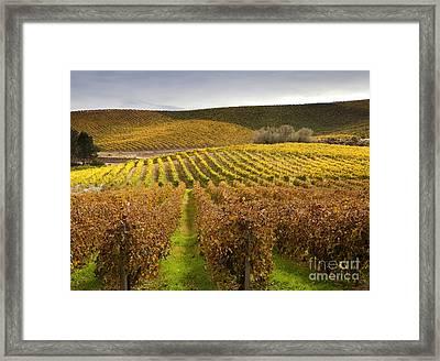 Autumn Vines Framed Print by Mike  Dawson