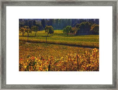 Autumn Vineyards Framed Print by Garry Gay