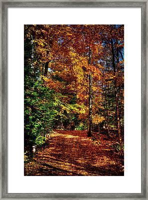 Autumn Walk Framed Print by David Patterson