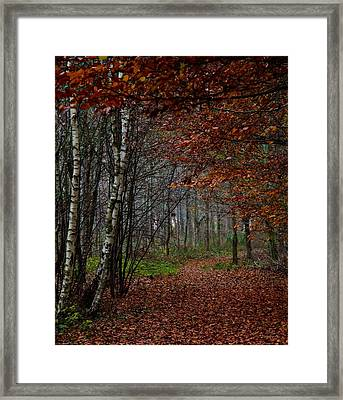 Autumn Walks Framed Print by Odd Jeppesen