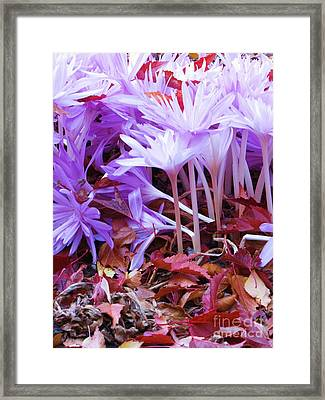 Framed Print featuring the photograph Autumn Water Lily Crocus by Michele Penner