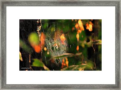 Autumn Web Framed Print by Sarai Rachel