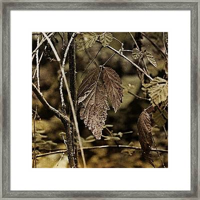 Autumn Whispers Framed Print by Bonnie Bruno