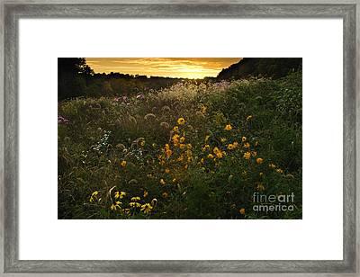 Autumn Wildflower Sunset - D007757 Framed Print by Daniel Dempster