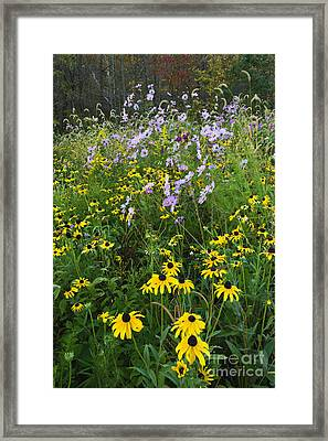 Autumn Wildflowers - D007762 Framed Print by Daniel Dempster