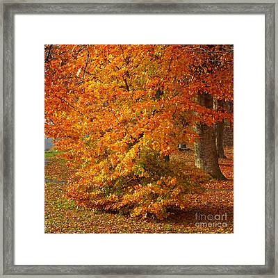 Autumn Wonder Framed Print