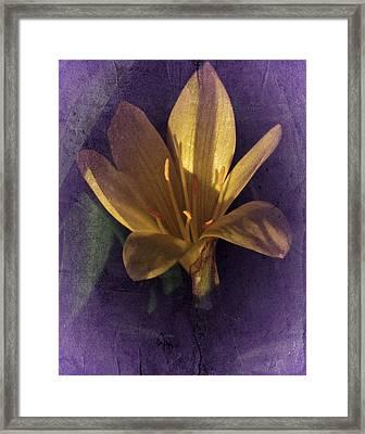 Autumn Yellow Crocus Framed Print