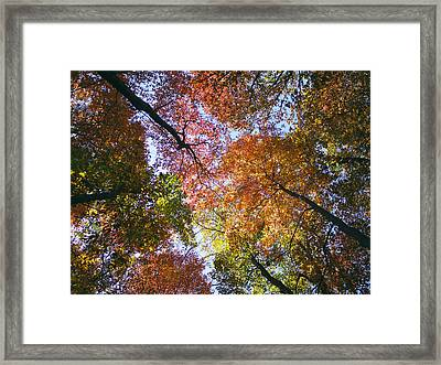 Autumnal Canopy Framed Print by Rob Amend