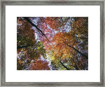 Autumnal Canopy Framed Print