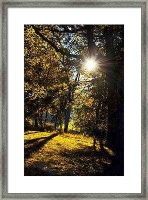 Autumnal Morning Framed Print by Bill Cannon