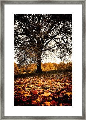 Autumnal Park Framed Print