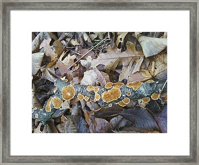 Framed Print featuring the photograph Autumns Art 2 by Gerald Strine