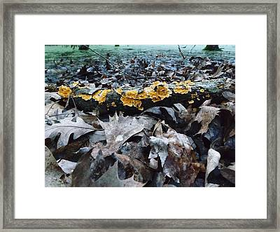 Framed Print featuring the photograph Autumns Art 3 by Gerald Strine