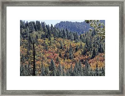 Autumns Palette Framed Print