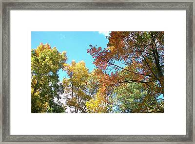 Framed Print featuring the photograph Autumn's Vibrant Image by Pamela Hyde Wilson