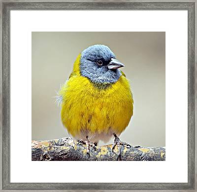 Ave Bird Framed Print by Edith Polverini