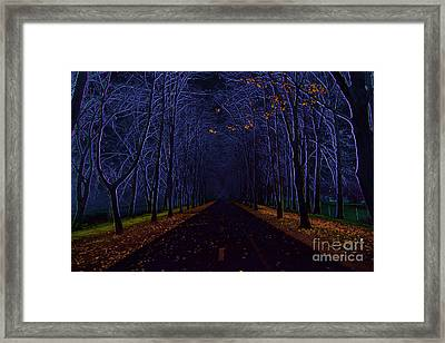 Avenue Of Trees Framed Print by Michal Boubin