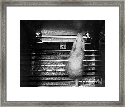 Aversion Research Framed Print by Omikron