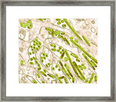 Avian Influenza, Tem Framed Print by Science Source