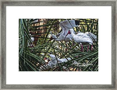 Aviary Framed Print