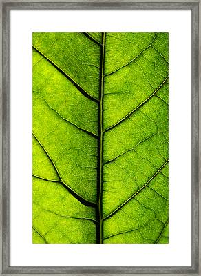 Avocado Leaf 2 Framed Print by Jessica Velasco