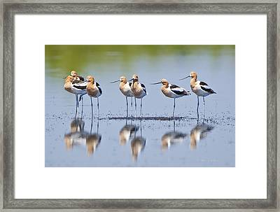 Avocet Boys Framed Print