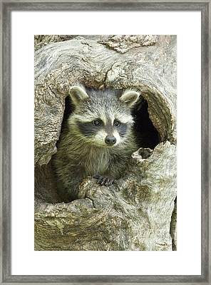 Awaiting Mom Framed Print by Sandra Bronstein