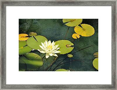Awaiting Monet Framed Print by Sandy Fisher