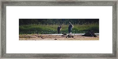 Awaiting The Hunt Framed Print by Kelly Rader