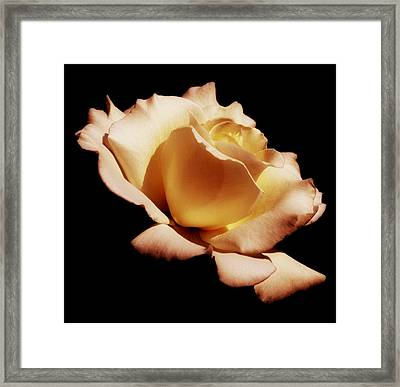 Awakening Framed Print by Kim Hojnacki