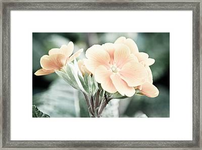 Awakening Framed Print by Ruth MacLeod