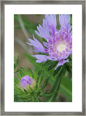 Awakenings Framed Print