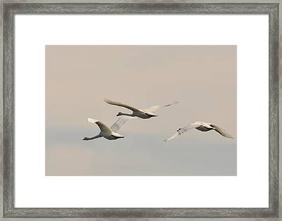 Away Framed Print by Deborah Bifulco
