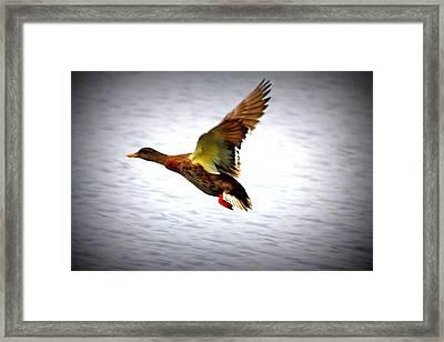 Away Framed Print by LC  Linda Scott