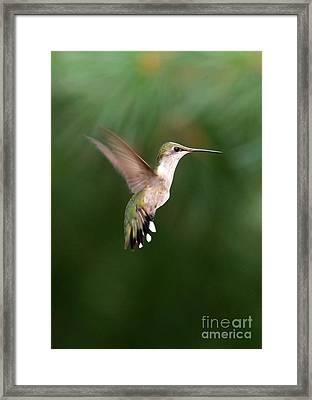 Awesome Hummingbird Framed Print by Sabrina L Ryan