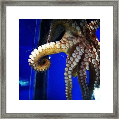 Awesome #ocean #octopus #animals #sea Framed Print